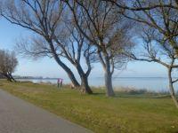 Der Wieker Bodden mit Blick zur Insel Hiddensee. - Bild 8: Fewo am Wieker Bodden 80m zum Wasser, WLAN,Terrasse, Garten, Fahrräder.