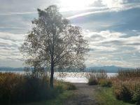 Bild 26: Ferienwohnung Fam. Sauer - mit herrlichem See- und Alpenblick -