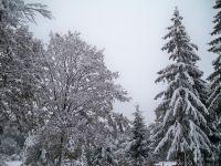 Einen Wintertraum im bayerischen Wald erleben, besuchen Sie uns einfach - Bild 17: Pension Fernblick - Urlaub mit Herz im bayerischen Wald