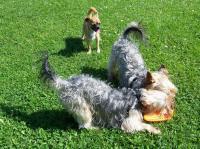 Bild 17: Ostseeurlaub mit Hund - Wassergrundstück Piratennest Darß