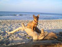 Geniesen Sie den schönen Hundestrand auf der Ostseehalbinsel Darss. - Bild 2: Erholung am Wasser - Ostseehalbinsel Darss mit Hund - Angeln