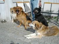 Bild 8: Landhaus Bodensee in Panormasichtlage Hunde sind herzlich willkommen. WOHNUNG 2