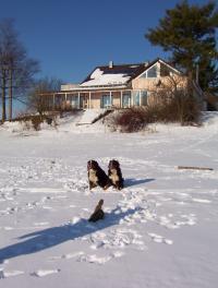 Bild 8: Landhaus Bodensee in Panormasichtlage Hunde sind herzlich willkommen. WOHNUNG 3