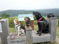 Unsere Hunde testen die Eifel-Blicke im nahe gelegenen Wachholdergebiet im Lampertstal in Alendorf. - Bild 17: Eifel-Ferienhaus Fliegenpilz - für Ihren Urlaub mit und ohne Hund