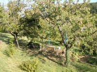 """Garten über 20 Obstbäume wie Apfel Kirschen Birnen Mirabellen - Bild 5: Ferienwohnung """"Am Jakobusweg"""" in Bamberg Appartement 3"""