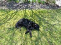 Bild 11: Böhrs Hoff Fehmarn für Ihren Urlaub mit Hund