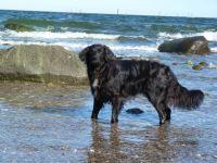Bild 14: Böhrs Hoff Fehmarn Ferienwohnung im Landhausstil ideal für Hundebesitzer