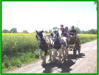 eine Kutschfaht mit unseren Pferden durch die Mecklenburger Landschaft - Bild 11: Ferienhof Winther, FeWo ab 34€/2 P.+Nacht, Nähe Schwerin und NSG Schaalsee