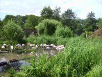 muss man gesehen haben- ein wunderschön angelegter Tierpark - Bild 14: Fewo bis 4 Personen - mit kostenlosem Schwimmbad in Timmendorfer Strand