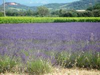 Bild 38: Ferienhaus in Südfrankreich/Provence mit Pool bei St. Remy de Provence