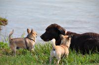 Das sind unsere Piraten Frodo, Fips + Zorro + Gästhund. - Bild 11: Ostseeurlaub Piratennest Darß - Hundeparadies - Wassergrundstück