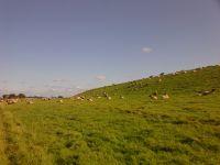 Bild 47: Schicke Fewo an der Nordseeküste-Ostfriesland