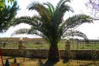 """Bild 2: Studios und Apartments im """" Haus der Familie"""" in Psakoudia"""