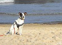 darf die ganze Familie :-) - Bild 11: Bakenberg - A49 FeWo Arkonaschwalbe, strandnah gelegen