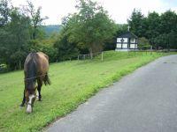 Bild 11: Ferienwohnung Haus Rübezahl