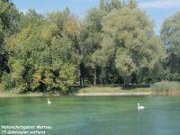 15 Gehminuten entfernt - Bild 5: 60qm Ferienwohnung Fam. Bill, Radolfzell Bodensee, 2 Schlafzi., bis 6 Pers.