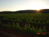 Bild 5: Kleines originelles Rebhaus mit Tierhgehege in der Provence verte