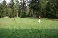 hier hat man genügend Platz zum Frisby spielen oder toben - Bild 14: Villa Nini mit eingezäunten Garten am Ledrosee für Urlaub mit dem Hund