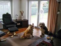 """Unsere Hunde Leines (Bobtail) und Emmily (Elohündin) - Bild 11: Ferienhaus """"Ostseetraum""""Urlaub mit Hund an der Ostsee 1,60m hoch eingezäunt"""