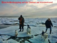 """Bild 32: Ferienhaus """"Ostseetraum""""Urlaub mit Hund an der Ostsee 1,60m hoch eingezäunt"""