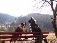 Unsere beiden geniesen die Aussicht, beim Spaziergang hinterm Haus - Bild 17: Exclusive Studio- Ferienwohnung im Schwarzwald - Hund incl.