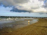 Die Möven am Strand müssen weg. - Bild 20: Hundefreundliches Ferienhaus im schönen Ostseebad Prerow