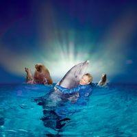 Fantastiche Show im Delphinarium (12 km) - Bild 32: Sehr schönes Ferienhaus, jetzt € 50,- Rabatt jedes Wochenende bis Mai