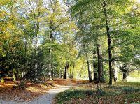 Wander- und Radwege im Horsterwold, gleich neben dem Park - Bild 26: Sehr schönes Ferienhaus, jetzt € 50,- Rabatt jedes Wochenende bis Mai