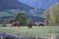 Bild 11: entzückendes Domizil mit eigenem eingezäunem Garten in Südtirol