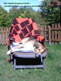Bild 2: Waldhaus in Weserbergland/Extertal bis 5 Personen-mit Sauna.Hund erlaubt.