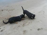 da muss doch was zu finden sein... Hundevergnügen unserer Vierbeiner - Bild 35: Ferienhaus Windrose Fehmarn OT Puttgarden