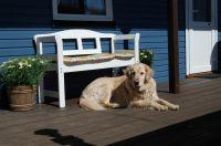 auch Ihr Hund ist gern bei uns willkommen - Bild 5: Ferienhaus Wiebers am Hohenfelder Ostseestrand ( 150 m )