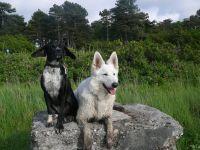 """Ostfriesland - finden wir gut! - Bild 17: Ferienhaus """"Kristina"""" an der ostfriesischen Nordseeküste - Hunde erlaubt"""