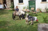 Manchmal muss auch der Mr. Macciato mit an die Leine - Bild 11: Ferienzimmer auf dem Bauernhof