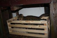 Überall findet sich ein Plätzchen für eins der vielen Kätzchen! - Bild 8: Ferienzimmer auf dem Bauernhof