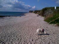 """Hier sehen Sie einen kleinen Teil des Strandes von Bliesdorf Strand, welchen Sie vom Haus in 2 Minuten zu Fuß direkt erreichen. Dieser Abschnitt ist das ganze Jahr für Hunde gestattet. Der ganze weitere Strand ist von Ende September bis Mitte Mai für Hunde frei. Außerdem gibt es noch einen """"kleinen"""" Geheimtipp, sobald Sie vor Ort sind! ;-) Da wir selber Hundebesitzer sind und auch hier im Gebiet wohnen, geniessen wir die Umgebung jeden Tag sehr bewusst. Ich selber schon seit über 40 Jahren. Jeder einzelne Tag (naja, nur ganz wenige Ausnahmen). Man geht aus den Haus und der Spaziergang fängt sofort an. Der Strand, die Steiküste, die beiden Wälder und die immer frische Meerluft. Mehr geht nicht. Frühjahr, Sommer, Herbst und Winter, es ist hier immer schön. Lassen Sie die Seele baumeln. Geniessen Sie hier die noch recht unberührte Natur. In 20-30 Geh-Minuten kommen Sie direkt nach Grömitz zum neu ausgebauten Grömitzer Yachthafen mit Restaurants und Cafes. Am Yachthafen beginnt auch die quirlige Grömitzer Strandpromenade. Hier treffen Sie auch viele Hundebesitzer, die allerdings nicht so schön wohnen wie Sie.; -) Hier ist also für jeden etwas dabei. Absolute Ruhe und Natur und auch Action, wenn man will. Grömitz ist ein bekannter Touristenort und bietet dementsprechend alles. - Bild 5: Hundefreundlich Ostsee mit tollem Meerblick"""