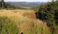 Wanderung zum Clemensberg(838m N.N)Entfernung ca. 3km bis zum Gipfel - Bild 17: Ferienhaus Woodland Lodge mit eingezäuntem Garten in Winterberg-Niedersfeld