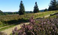 Nahegelegenes Naturschutzgebiet Hochheide läd zum Wandern ein - Bild 20: Ferienhaus Woodland Lodge mit eingezäuntem Garten in Winterberg-Niedersfeld