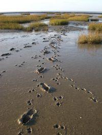 bei uns können Sie Ihre Spuren im Watt hinterlassen - Bild 14: Haus Strandläufer direkt hinterm Deich Hunde & Kinder herzl. willkommen