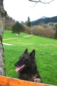 """im Ferienhaus sind Hunde herzlich willkommen - Bild 8: Ferienhaus """"Häusl"""" in Pfronten im Allgäu"""