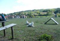 Bild 14: Wohlfühlurlaub mit Hund im familienfreundlichen Ferienhaus - Thermalbadnähe