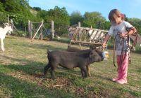 Bild 26: Wohlfühlurlaub mit Hund im familienfreundlichen Ferienhaus - Thermalbadnähe