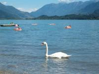 Domaso Strand nur 200mt. Weit - Bild 29: Lakeside Holiday Resort Anlage mit Pool fuer 6 Personen